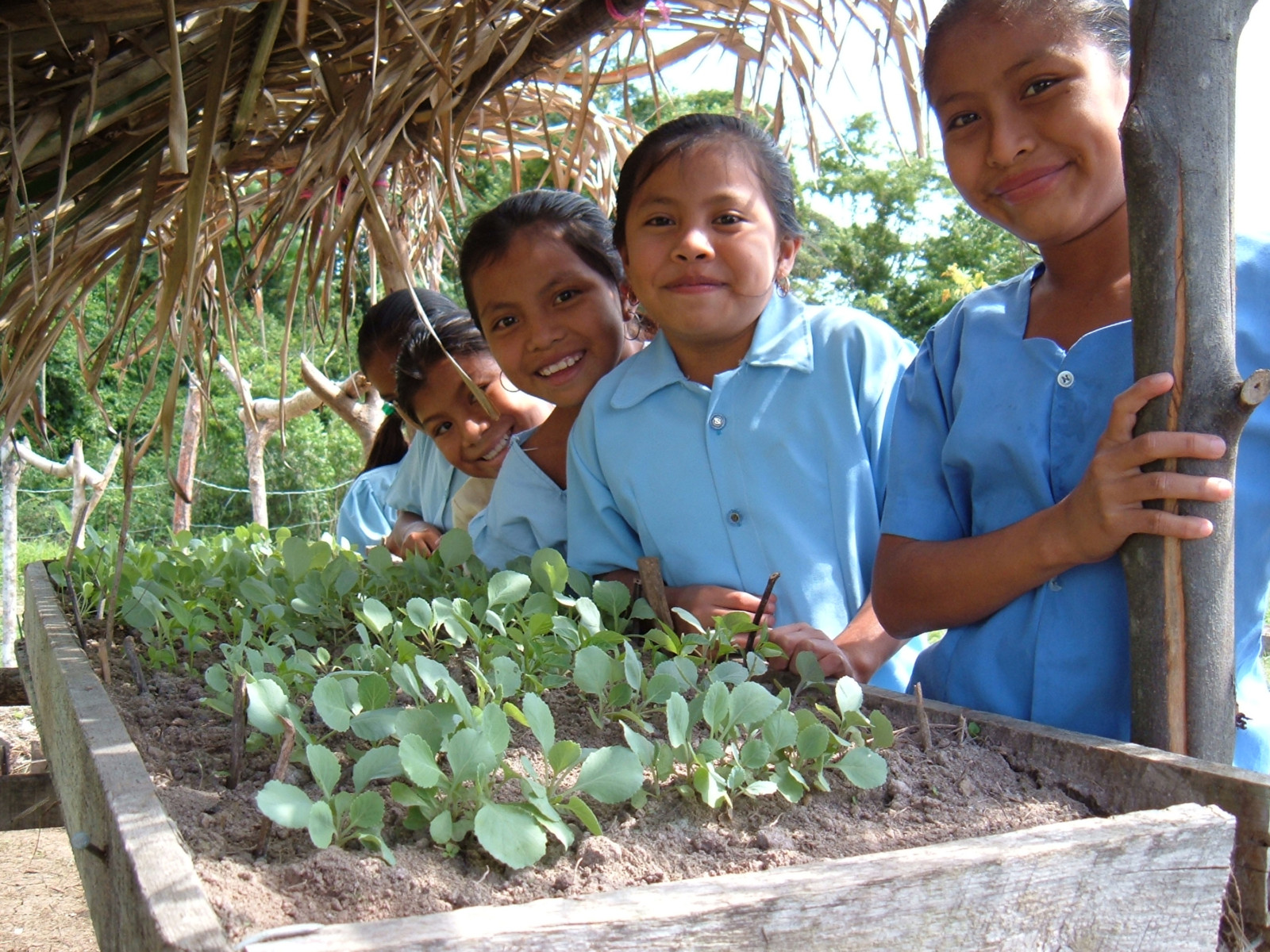 Plenty Belize school garden program.